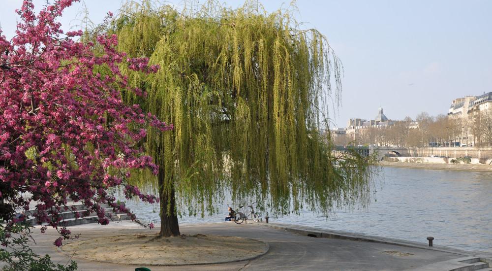 Top 10 plus beaux endroits paris avec wifi gratuit for Jardin tino rossi